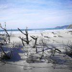Arena de la playa que se encuentra a 2 Km de la casanosa