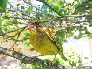 pájaro en una rama del jardín