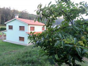 fotografía del castaño de la casa